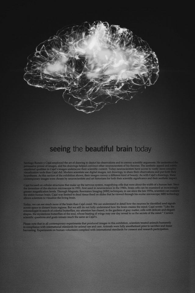 Left brain vs right brain in education